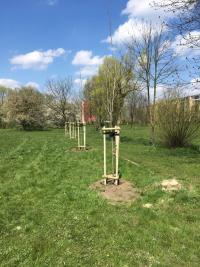 Nasadzenia nowych drzew