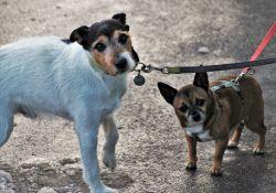 Wyższe mandaty za niedopilnowanie psa
